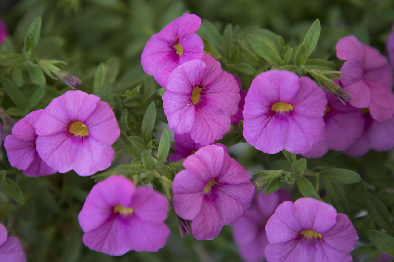 Fotografare i fiori - prima parte